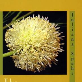 Rachel Zolf on Juliana Spahr: The Transformation thinks wit(h)ness